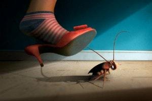 Борьбпа с тараканами