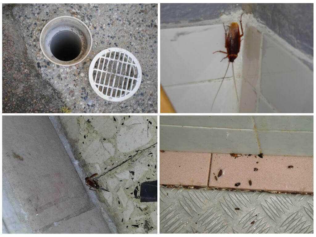 Уничтожение тараканов в Можайске
