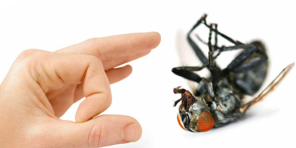 Самостоятельная борьба с мухами