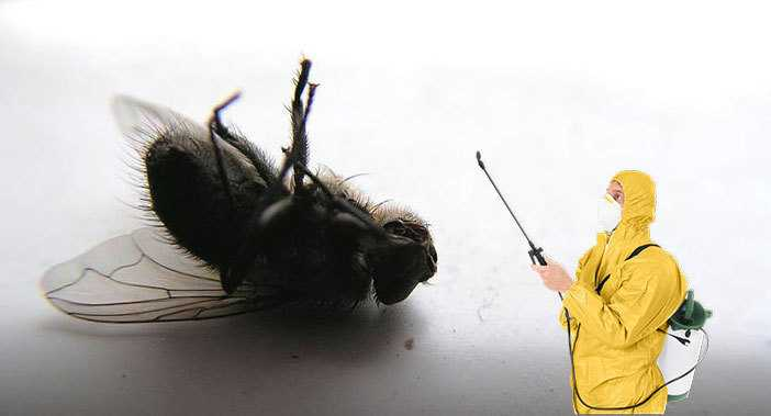 Борьба с мухами в домашних условиях